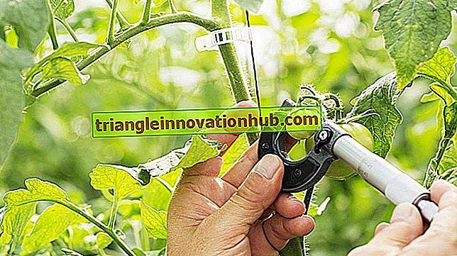 Landbouwinvoer voor progressieve landbouweisen - landbouw