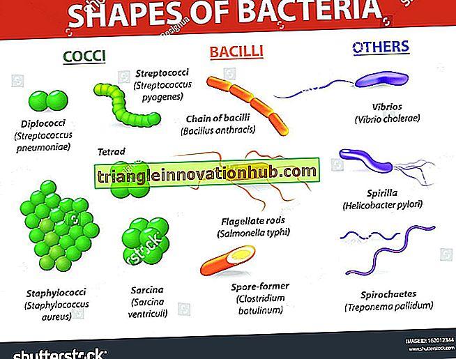 Bakterien: Definition, Größe, Form und Anordnung (mit Abbildung) - Bakterien