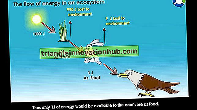 Dòng năng lượng trong một hệ sinh thái - (có sơ đồ)
