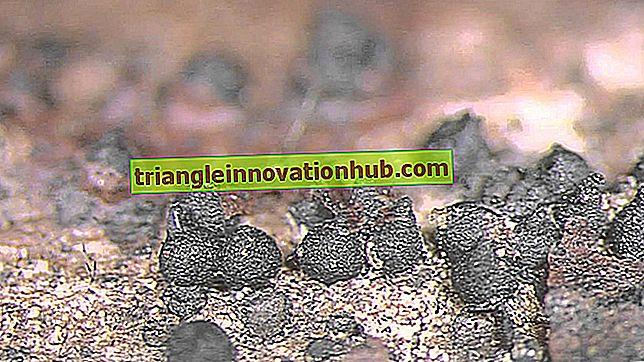 Reproduktion i svampe: Vegetative, seksuelle og seksuelle metoder - svampe