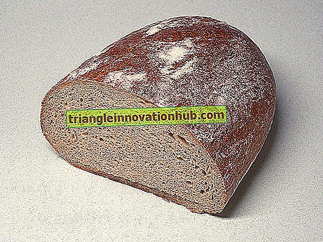 9 ingrédients principaux utilisés dans la fabrication du pain - Sciences de la maison