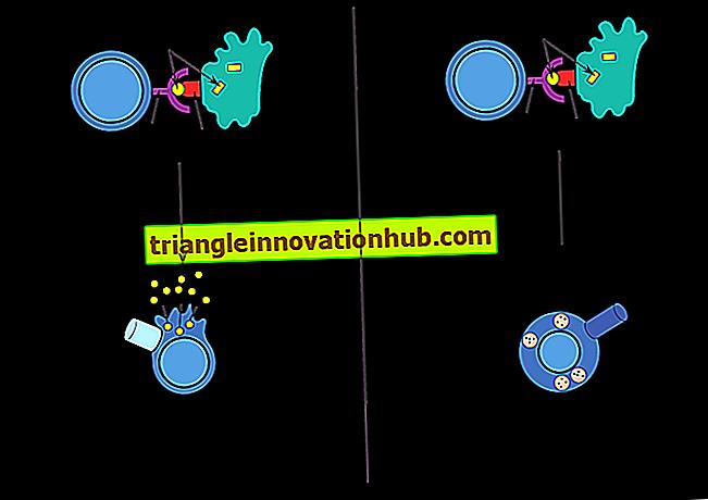 Belangrijke histocompatibiliteitscomplexen en antigenen die cellen voorstellen (met figuren) - immunologie